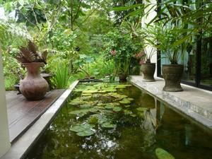 bassin de jardin tropical. Black Bedroom Furniture Sets. Home Design Ideas